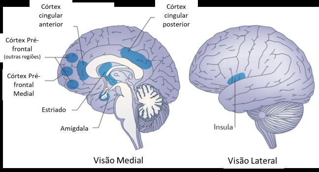imagem cerebro